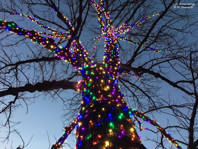 longwood-gardens-under-the-colorful-tree