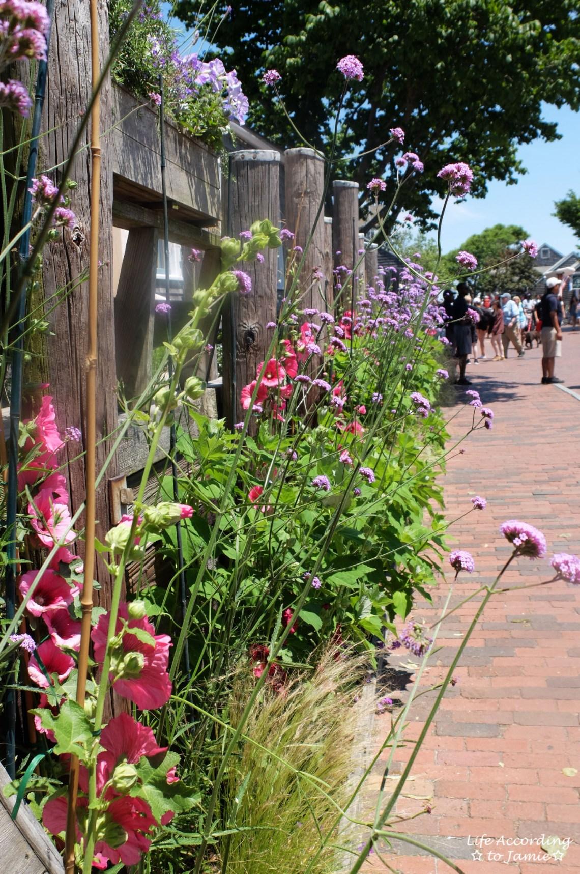 Nantucket - Sidewalk flowers