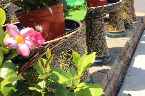 Bird Baths & Plants