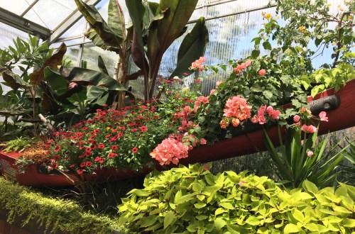 Royal Botanical Gardens - Flowers in Canoe