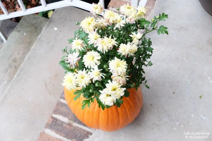 Pumpkin Planter + Mums 2