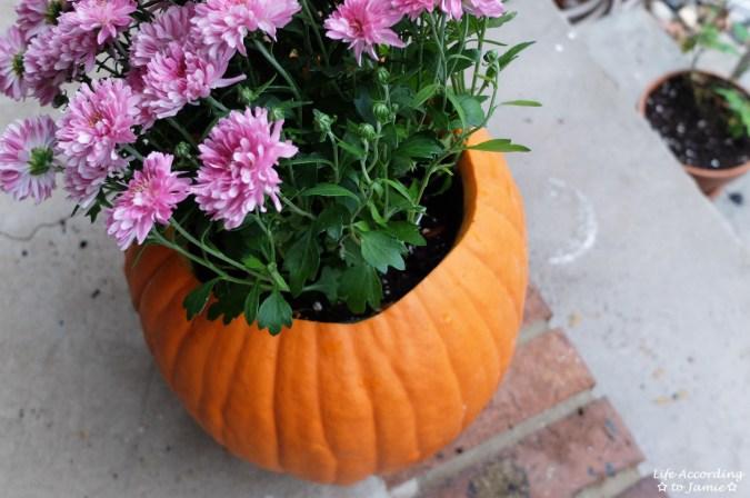 Pumpkin Planter + Mums 5