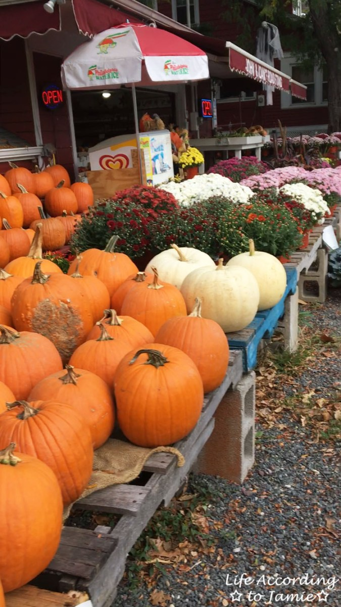 Pumpkins - Farmstand