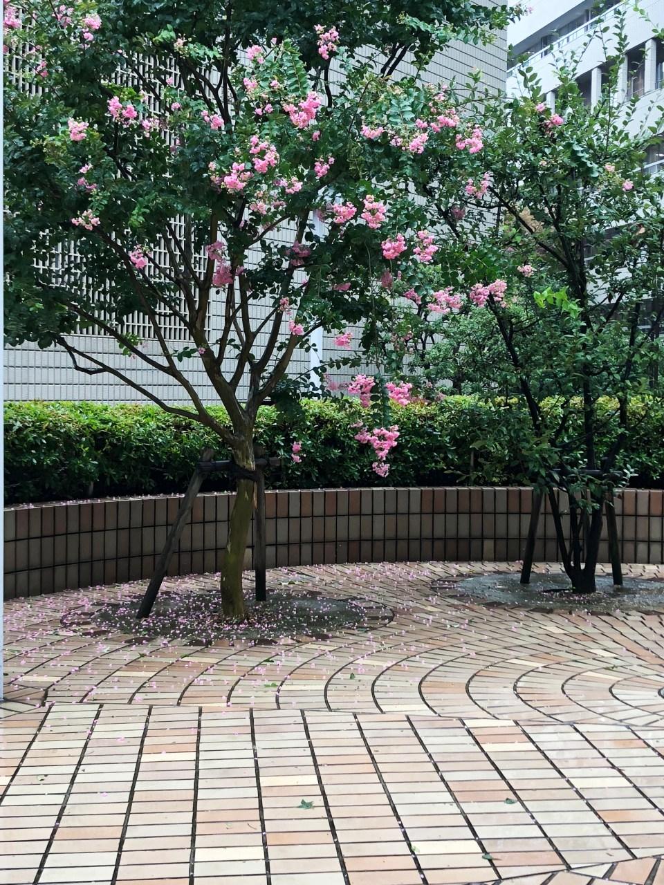 Tokyo - flowering tree