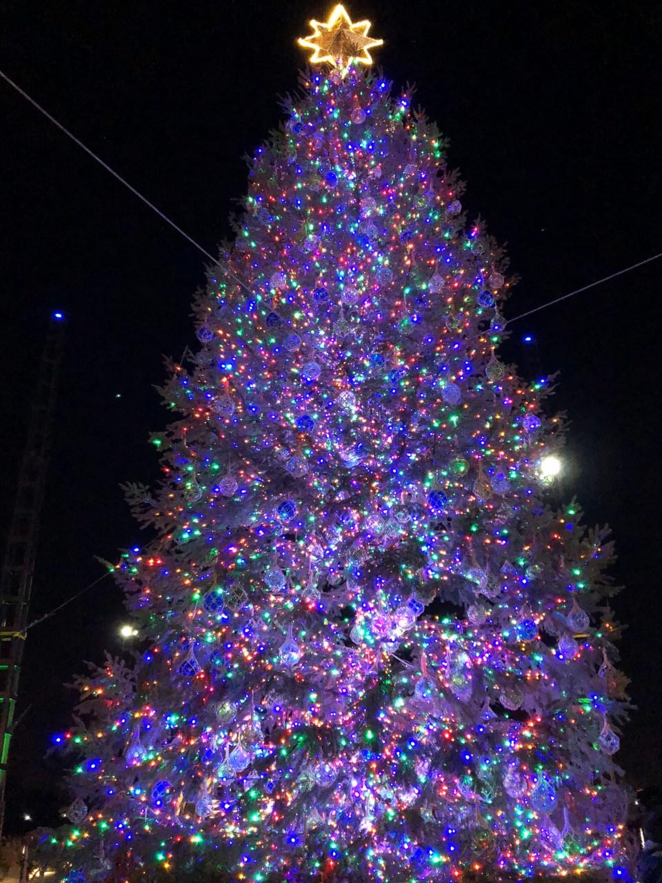 Washington DC Wharf - Christmas Tree