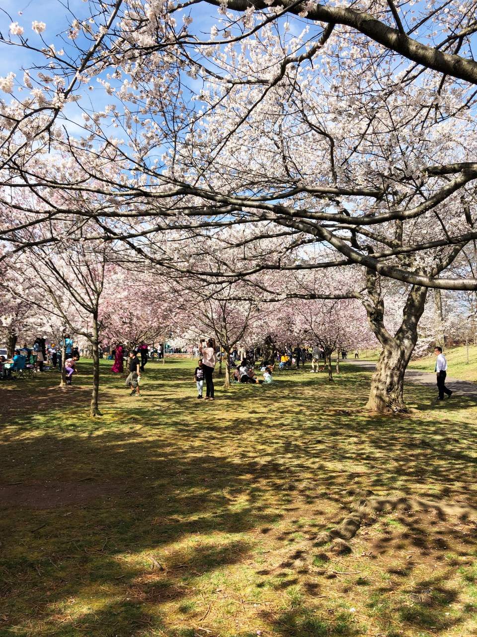 Branch Brook Park - Cherry Blossom Festival 1