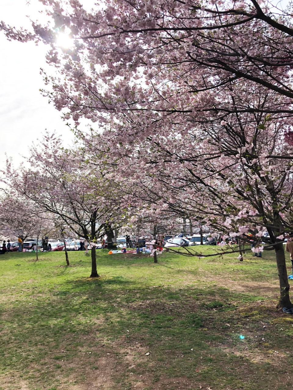 Branch Brook Park - Cherry Blossom Festival 9