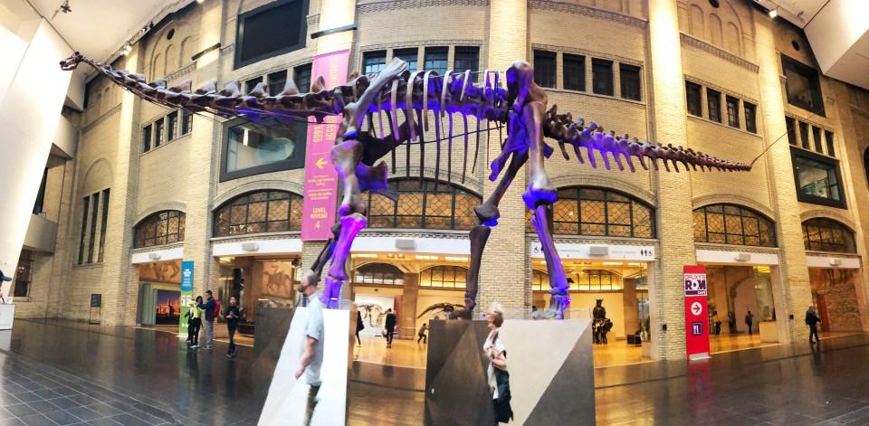 Royal Ontaio Museum - Dinosaur