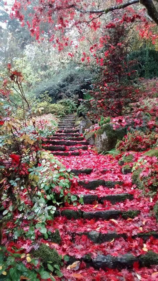 secret garden - flower stairs