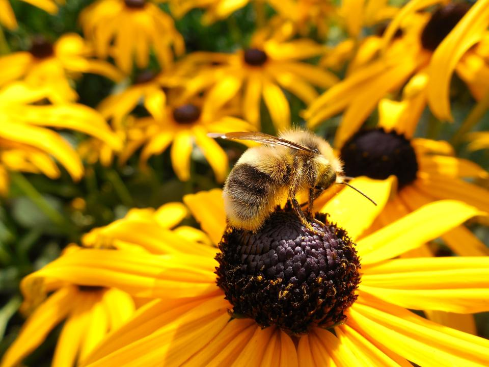 animal-beautiful-bee-266731