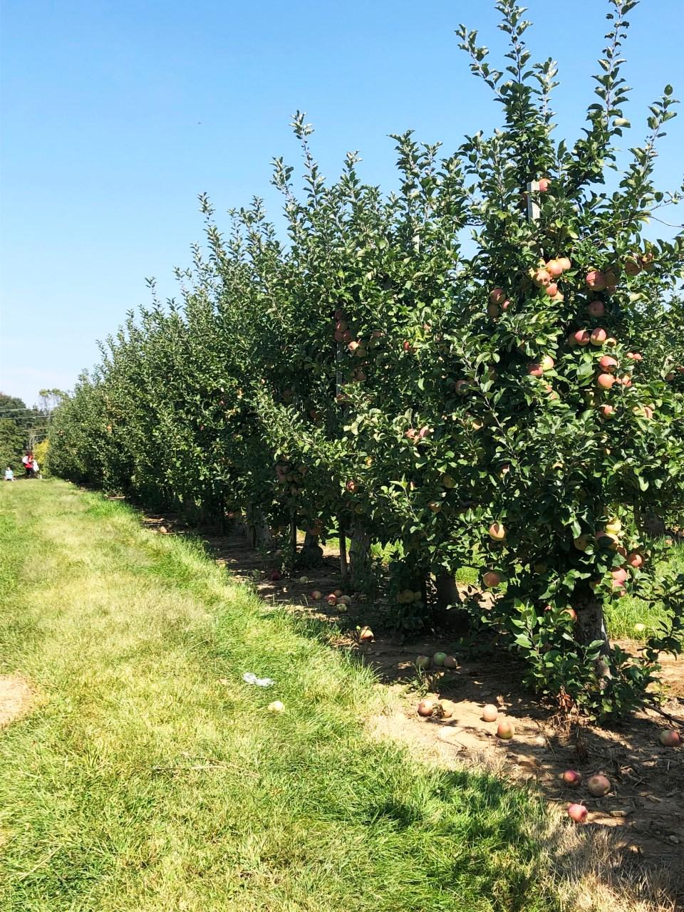Terhune Orchards 15
