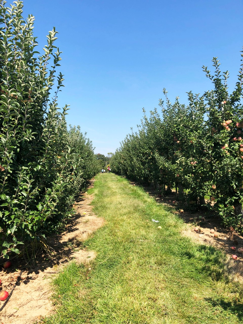 Terhune Orchards 16