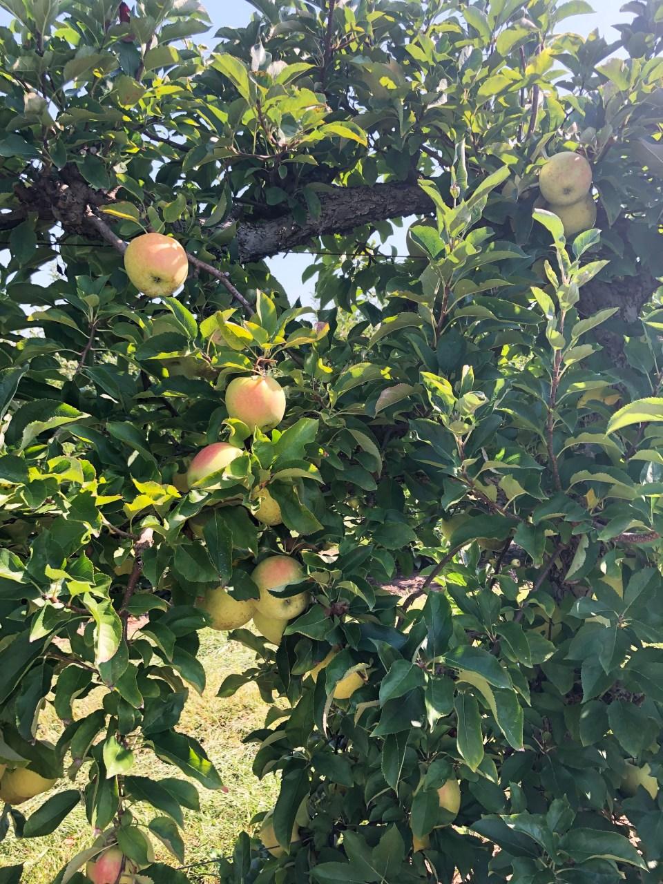 Terhune Orchards 8