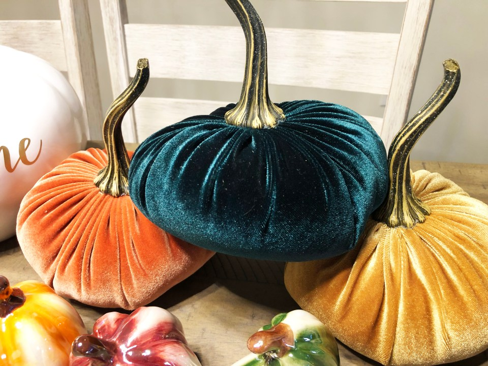 Velvet Pumpkins 4