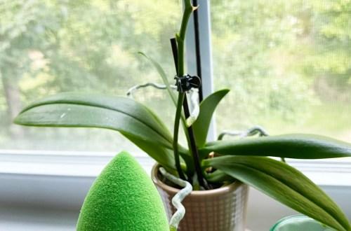 Beautyblender-BioPure-Green-Sponge