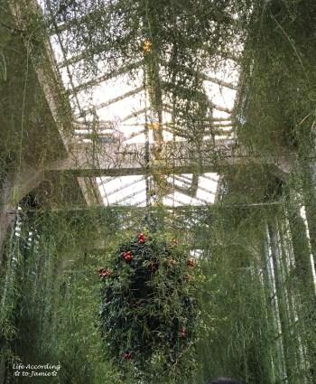 Longwood Gardens - Green Plants