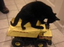 truck riding foster kitten