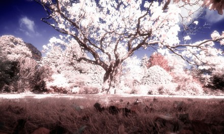 Create spectacular landscapes with the Color Efex Pro Infrared Film effect