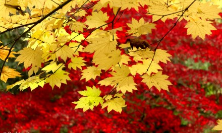 Improve autumn colours with Google's Contrast Colour Range filter