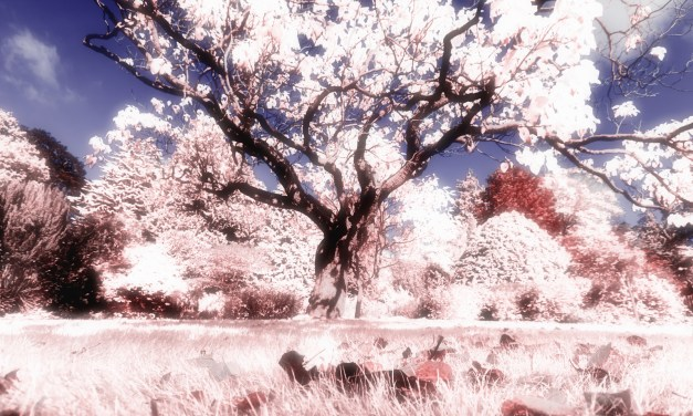 See the world in infra red