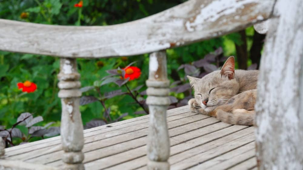 Cat Sleeping On A Bench In Garden Of Cat Friendly Plants