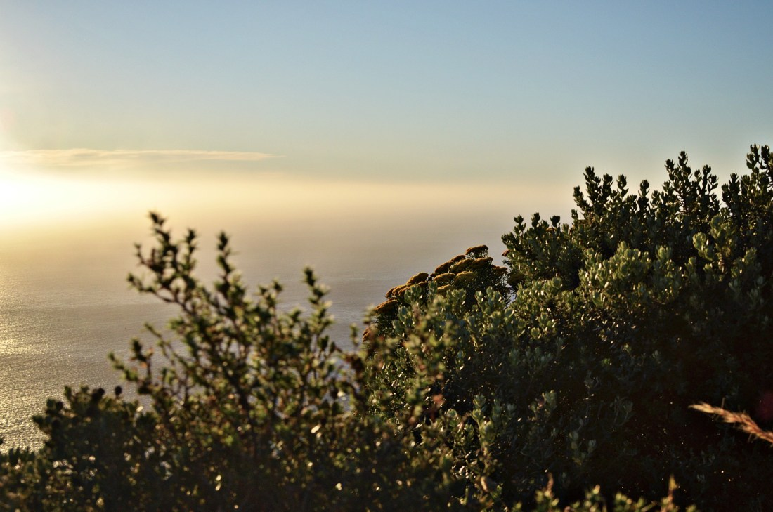 An adventure you can't miss when visiting Cape Town is the Lion's Head sunset hike. You can even make this a sunrise or full-moon experience!
