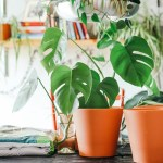 4 Ways Home Interior Can Improve Your Health And Wellbeing