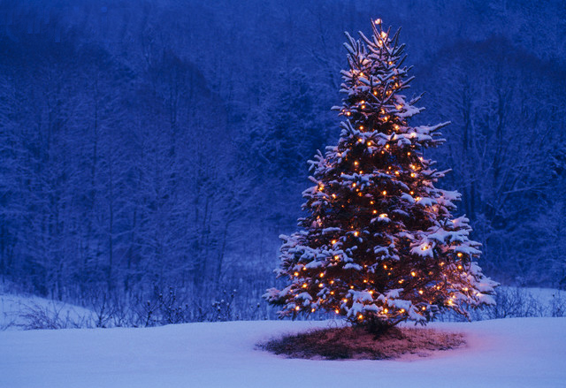 Christmas Tree and Forest --- Image by © Jim Craigmyle/CORBIS