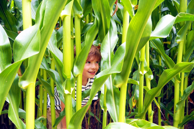 life as our little family, wheelock farm
