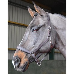 Whitaker Leather Headcollar