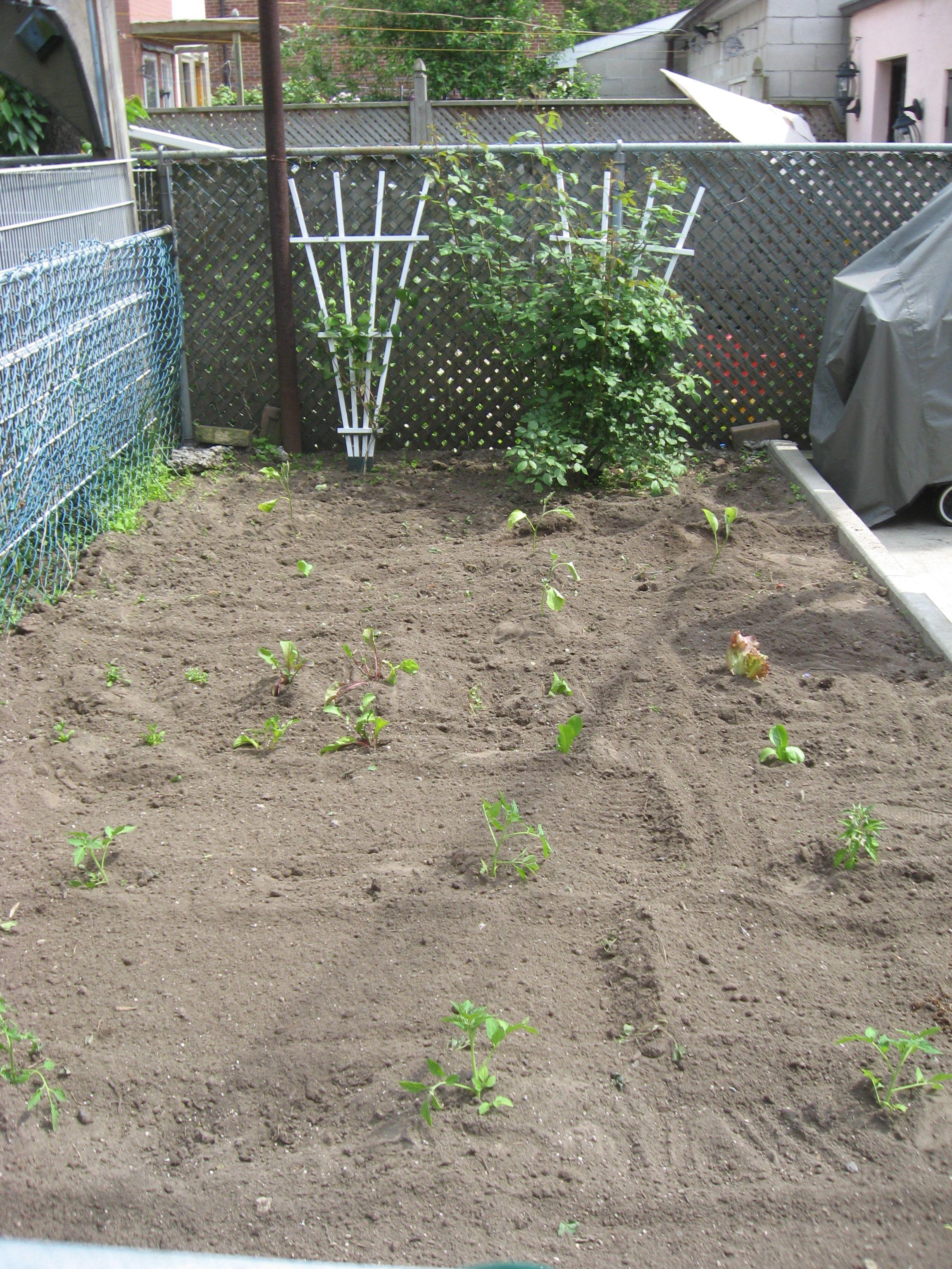 Garden Plot Week 1: June 6th
