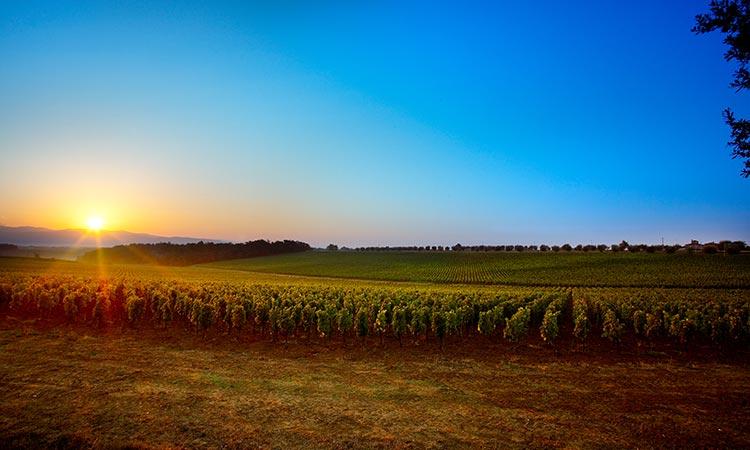 avignonesi vineyard tuscany
