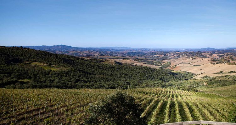 montecucco-wine-header-750x400