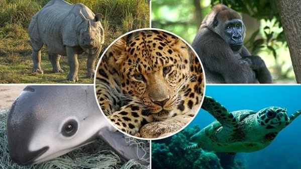 World facing biggest mass extinction since dinosaurs ...