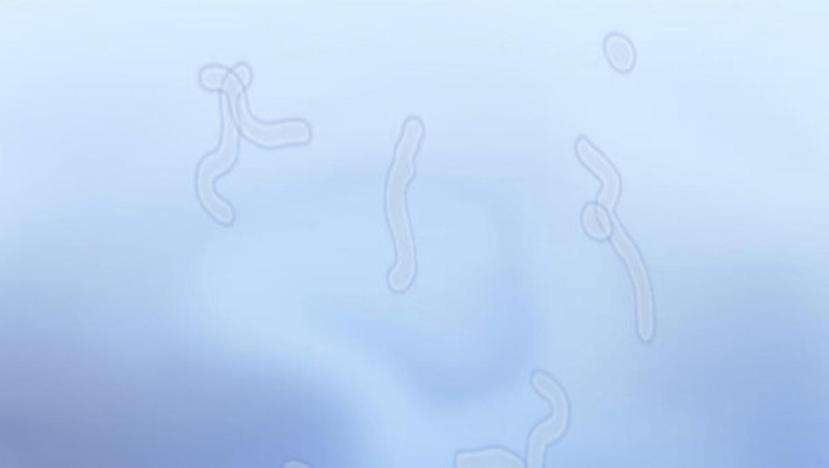 蚊 治療 飛 症