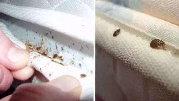5個跡象表明家裡有床蝨!