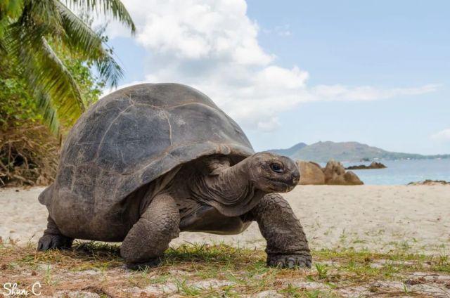 亞達伯拉象龜