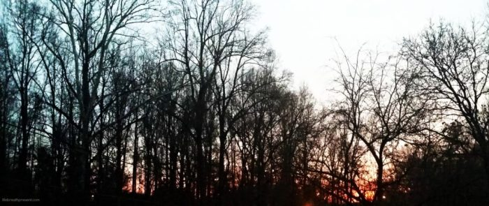 morning, sun, trees, sunrise, treetops, photography, light