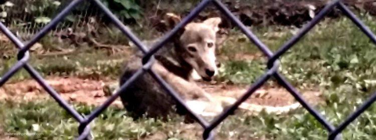fox, park