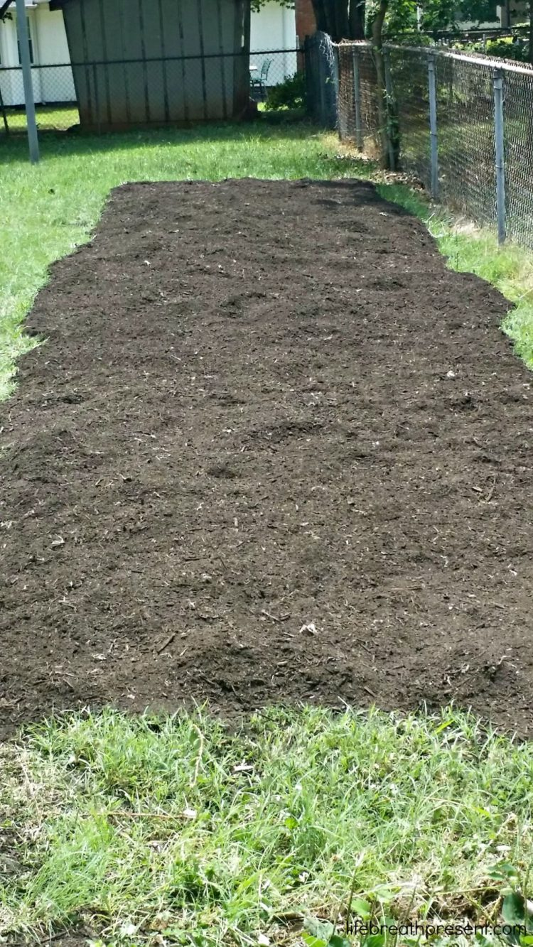garden, gardening, family, learning, back to eden, beginning, large garden space