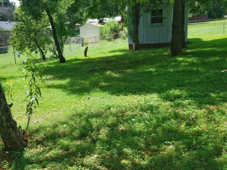 grass, green, growing, summer, sun, yard