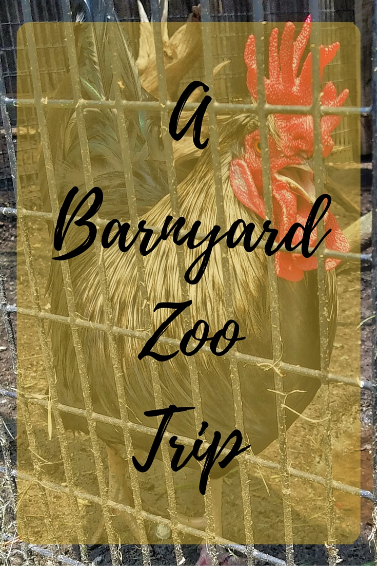barnyard, zoo, trip, family, fun, adventure, travel