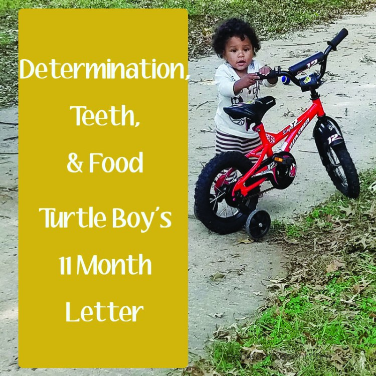 turtle boy, bike, play, playing, outside, fun, 11 months, determination, teeth, food, letter