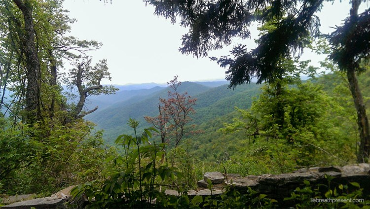 forest, family, adventure, travel, hiking, national park, pisgah national forest, overlook