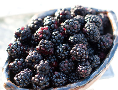 blackberries: Blackberry Curd with Scottish Shortbread: Blackberry curd instead of lemon curd- a delicate flavor. Shortbread cookies- lightly sweet. Wow, this would be a great snack for tea time. https://lifecurrentsblog.com