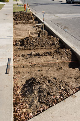 Xeriscaping... Parkway complete frontyard parkway xeriscaping (drought tolerant) during