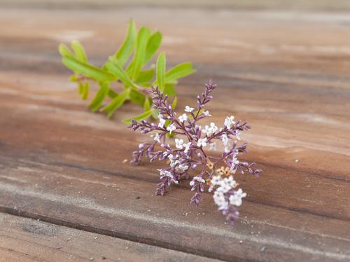 lemon verbena flowers: Vanilla Scented Lemon Verbena Marmalade