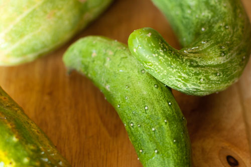 Sweet Pickle Relish cucumbers