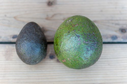 Reed Avocado, a review of the summertime organic fruit: another variety of avocado, this one, a summertime variety called the Reed avocado, was great.