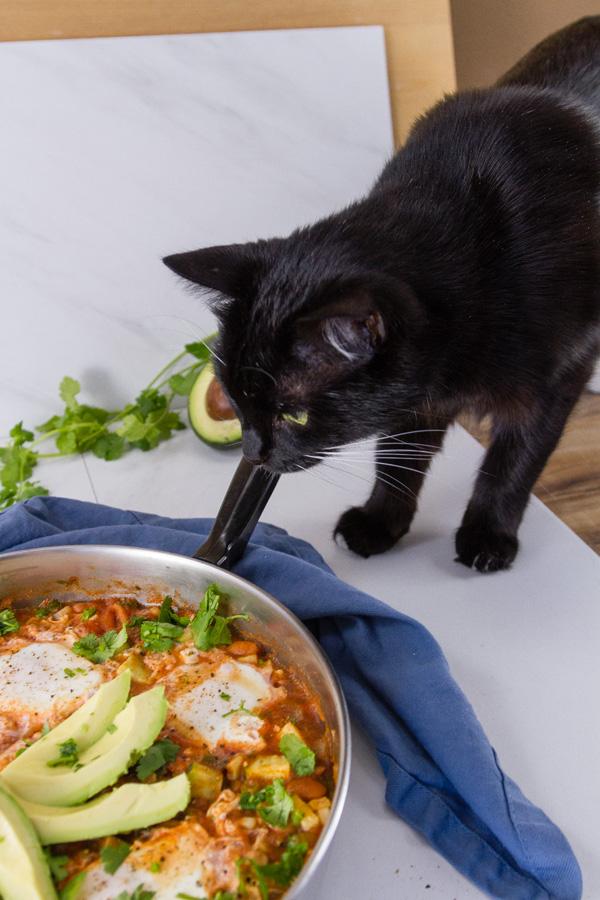 black cat investigating skillet eggs dinner